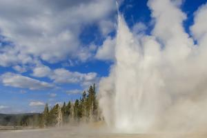Lone Observer Watches Grand Geyser Erupt, Upper Geyser Basin, Yellowstone National Park by Eleanor Scriven