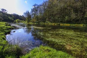 River Weed and Marsh Marigolds (Caltha Palustris) of Lathkill Dale in Spring by Eleanor Scriven