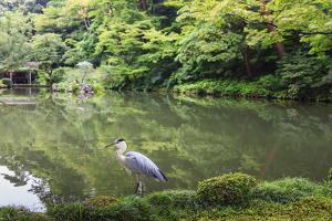 Stork at Hisagoike Pond in Summer, Kenrokuen, One of Japan's Three Most Beautiful Landscape Gardens by Eleanor Scriven