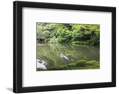 Stork at Hisagoike Pond in Summer, Kenrokuen, One of Japan's Three Most Beautiful Landscape Gardens