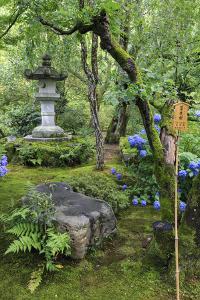 Tenryu-Ji Temple Garden, Japan by Eleanor Scriven