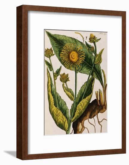 Elecampane-Elizabeth Blackwell-Framed Giclee Print