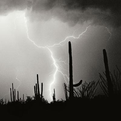 Electric Desert IV BW-Douglas Taylor-Photographic Print