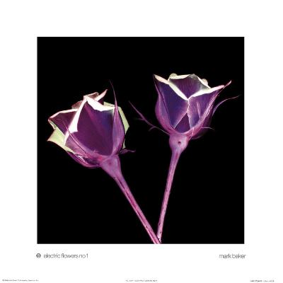 Electric Flowers No. 1-Mark Baker-Art Print