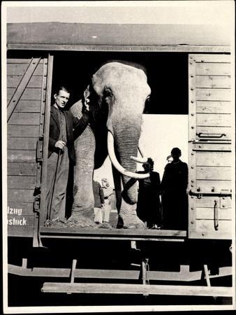 https://imgc.artprintimages.com/img/print/elefant-mit-tierhueter-am-eingang-des-eisenbahnwaggons_u-l-poouod0.jpg?p=0