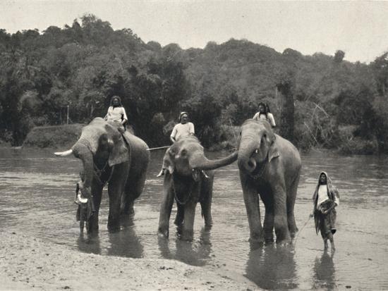 'Elefanten im Bade (Mahaaliganga)', 1926-Unknown-Photographic Print