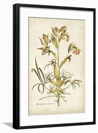 Elegant Botanical II-J.j. Plenck-Framed Art Print
