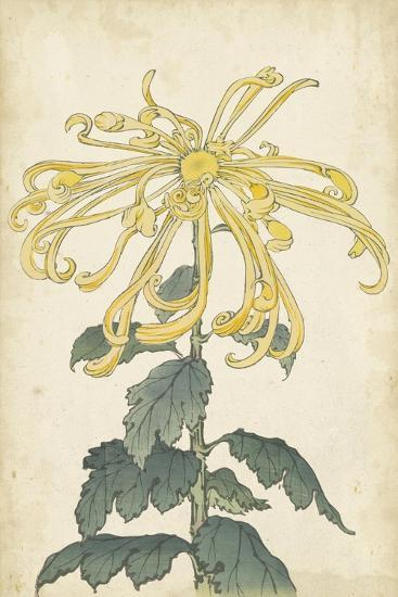 Elegant Chrysanthemums II--Art Print