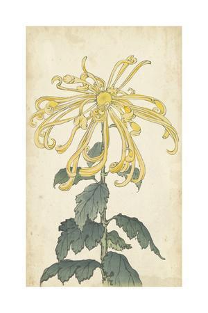 https://imgc.artprintimages.com/img/print/elegant-chrysanthemums-ii_u-l-pwa1d40.jpg?p=0