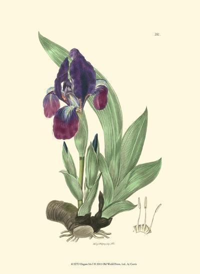 Elegant Iris I-Samuel Curtis-Art Print
