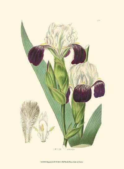Elegant Iris IV-Samuel Curtis-Art Print