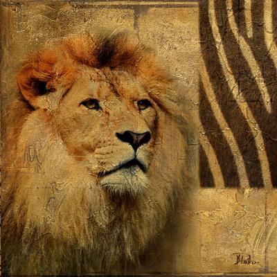 Elegant Safari II (Lion)-Patricia Pinto-Art Print