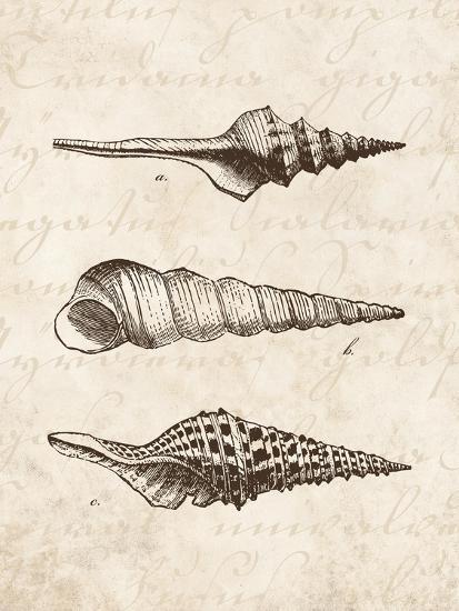 Elegant Shells II-N^ Harbick-Art Print