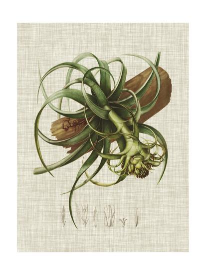 Elegant Tropicals V-Vision Studio-Art Print
