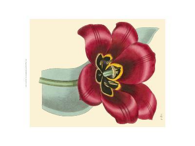 Elegant Tulips IV-Vision Studio-Art Print