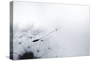 Dandelion Seed by Elena Kalistratova
