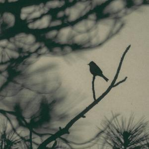 Caligraphy Bird I by Elena Ray