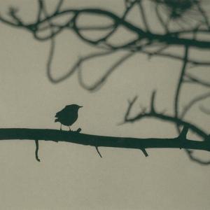 Caligraphy Bird II by Elena Ray
