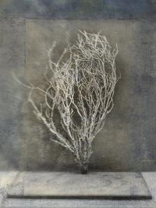 Desert Form III by Elena Ray