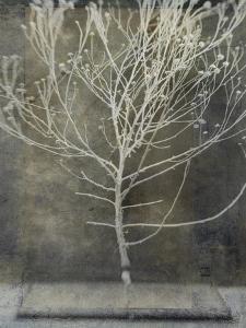 Desert Form IV by Elena Ray