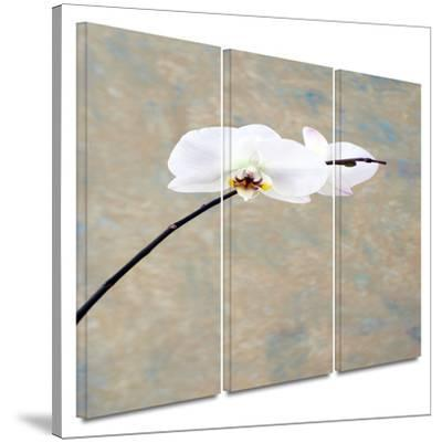 Orchid Blossom 3 piece gallery-wrapped canvas by Elena Ray