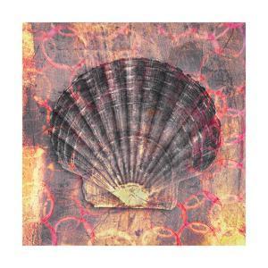 Seashell-Scallop by Elena Ray