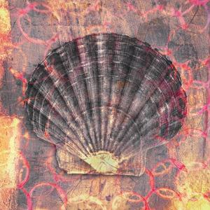 Seashell-Scallop by Elena Ray