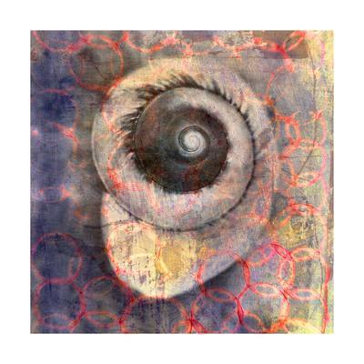 Seashell-Snail