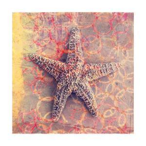 Seashell-Starfish by Elena Ray