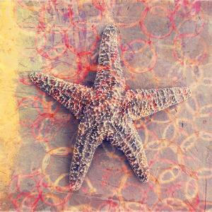Seashell-Starfish by Elena Ray