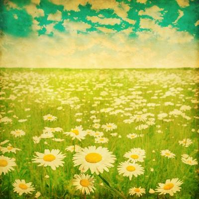 Vintage Photo of Daisy Field and Cloudy Sky