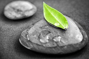 Black and White Zen Stones Submerged in Water with Color Accented Green Leaf by elenathewise