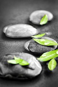 Black and White Zen Stones Submerged in Water with Color Accented Green Leaves by elenathewise