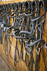 Leather Horse Bridles and Bits Hanging on Wall of Stable by elenathewise