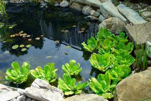 Natural Stone Pond as Landscaping Design Element by elenathewise