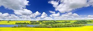 Panoramic Landscape Prairie View of Canola Field and Lake in Saskatchewan, Canada by elenathewise