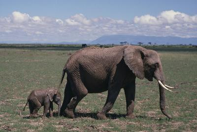 Elephant Adult and Baby-DLILLC-Photographic Print