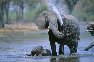 Elephant and Calf Cooling Off in River-Paul Souders-Photographic Print