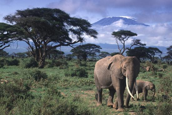 Elephant and Calf in Amboseli National Park-DLILLC-Photographic Print