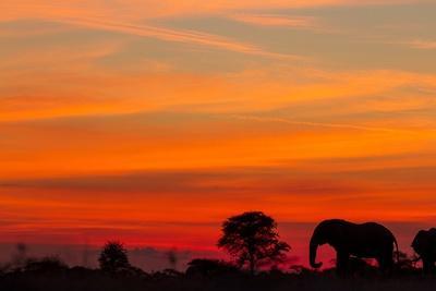 Elephant at Dusk, Nxai Pan National Park, Botswana-Paul Souders-Photographic Print