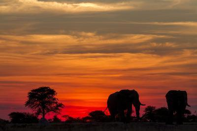 Elephant at Dusk, Nxai Pan National Park, Botswana-Paul Souders-Photographic Print