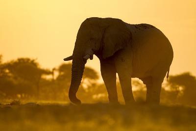Elephant at Water Hole, Nxai Pan National Park, Botswana-Paul Souders-Photographic Print