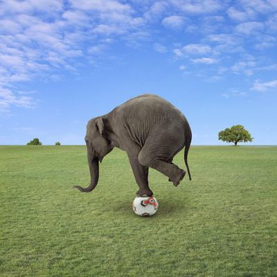 https://imgc.artprintimages.com/img/print/elephant-balancing-on-football_u-l-q10dftw0.jpg?p=0