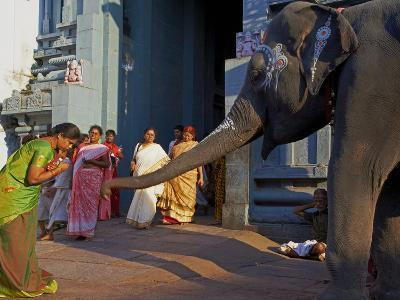 Elephant Benediction, Kamakshi Amman, Kanchipuram, Tamil Nadu, India, Asia-Tuul-Photographic Print
