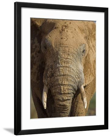 Elephant, Covered in Mud, Eastern Cape, South Africa-Steve & Ann Toon-Framed Photographic Print