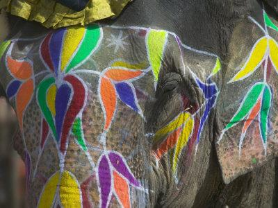 https://imgc.artprintimages.com/img/print/elephant-decorated-with-colorful-painting-jaipur-rajasthan-india_u-l-p23xeo0.jpg?p=0