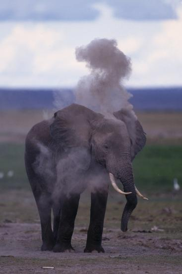 Elephant Dust Bathing-DLILLC-Photographic Print