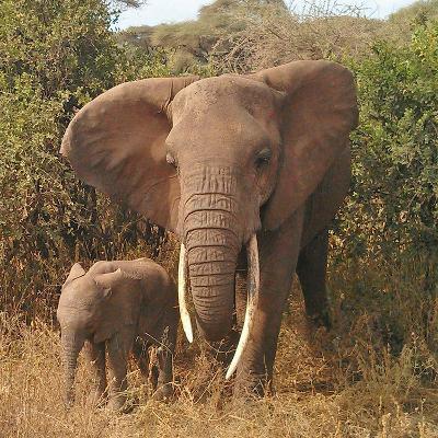 Elephant Family-Wonderful Dream-Art Print
