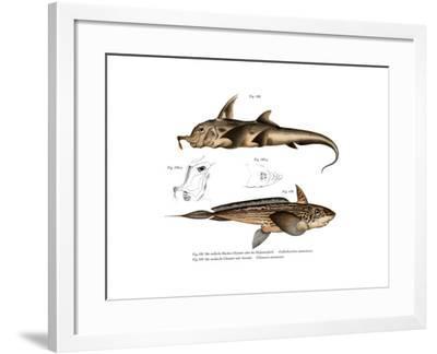 Elephant Fish--Framed Giclee Print