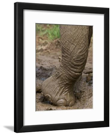 Elephant Foot in a Mud Puddle-Michael Nichols-Framed Photographic Print